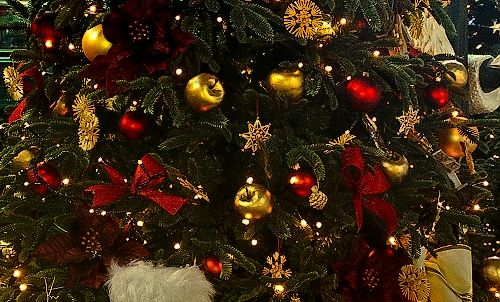 Výsledok vyhľadávania obrázkov pre dopyt vianočný stromček slovenský